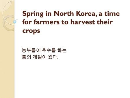 Spring in North Korea, a time for farmers to harvest their crops 농부들이 추수를 하는 봄의 계절이 왔다.