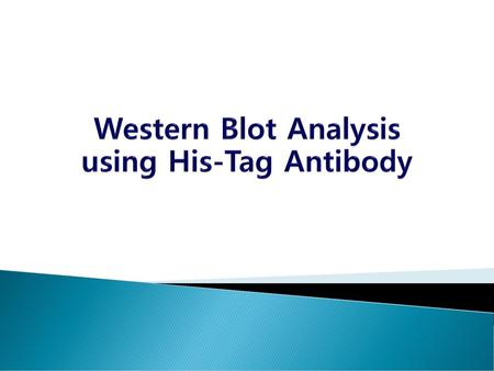 Western Blot Analysis using His-Tag Antibody