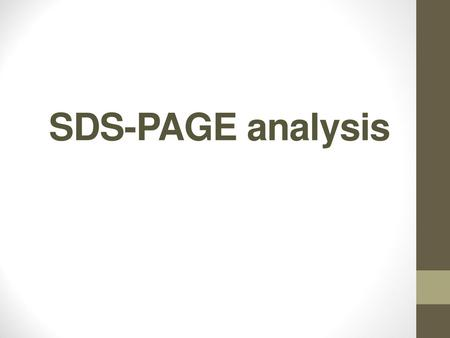 SDS-PAGE analysis.
