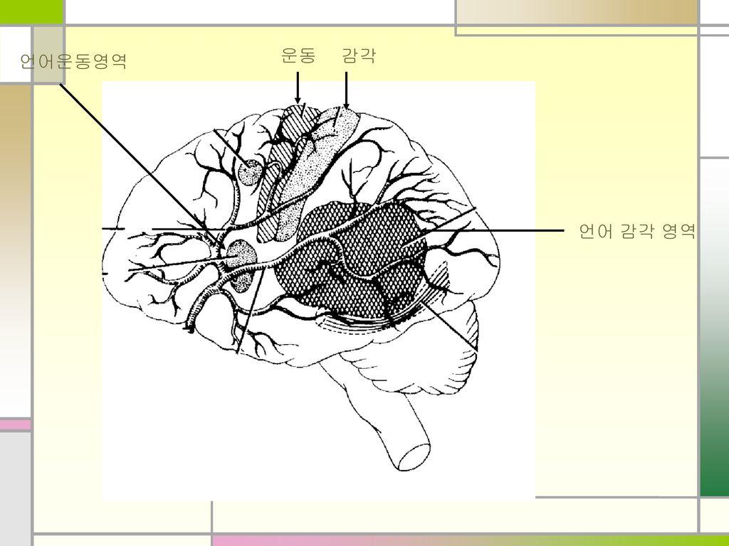 감각 운동 언어운동영역 언어 감각 영역