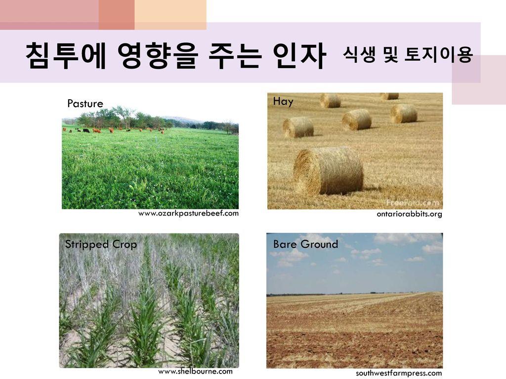 침투에 영향을 주는 인자 식생 및 토지이용 Pasture Hay Stripped Crop Bare Ground