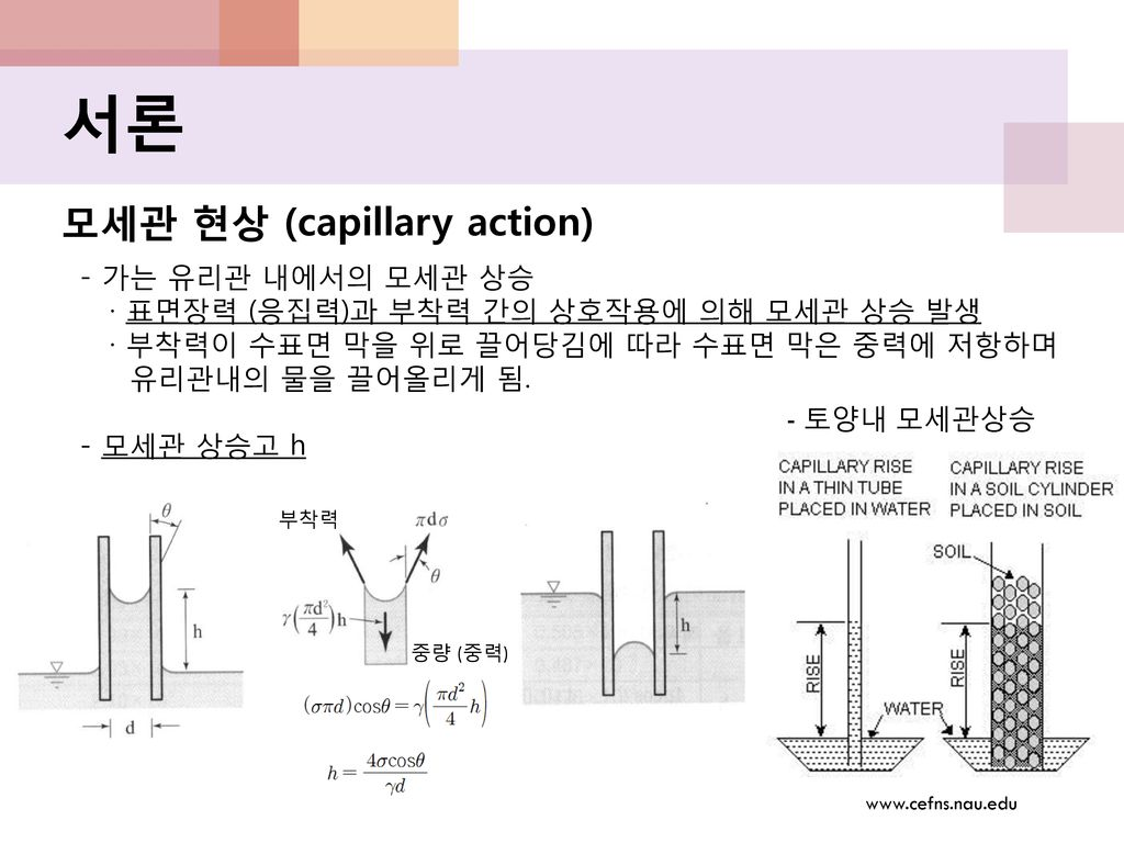 서론 모세관 현상 (capillary action) - 가는 유리관 내에서의 모세관 상승