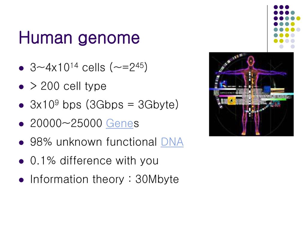Human genome 3~4x1014 cells (~=245) > 200 cell type