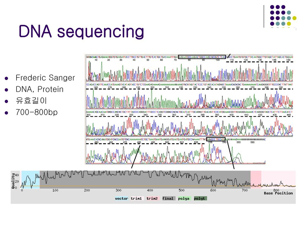 DNA sequencing Frederic Sanger DNA, Protein 유효길이 bp