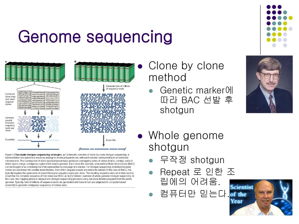 Genome sequencing Clone by clone method Whole genome shotgun