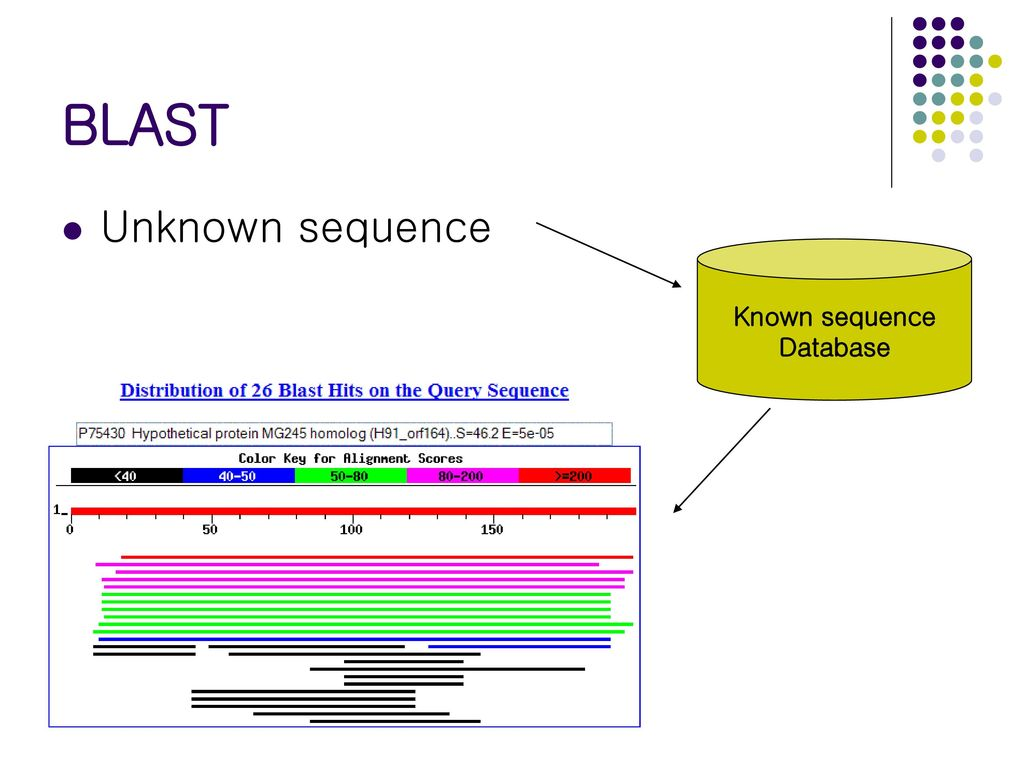 BLAST Unknown sequence Known sequence Database