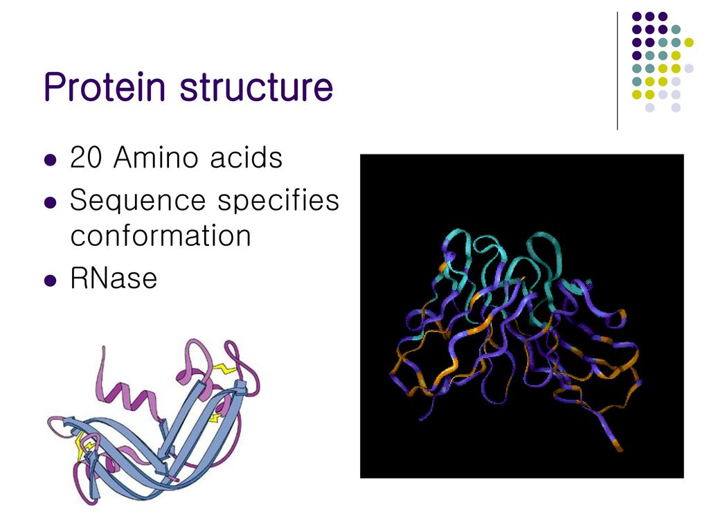 Protein structure 20 Amino acids Sequence specifies conformation RNase