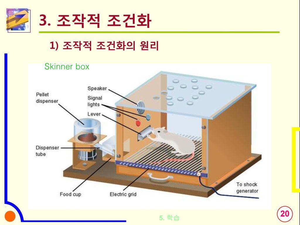 3. 조작적 조건화 1) 조작적 조건화의 원리 Skinner box 5. 학습