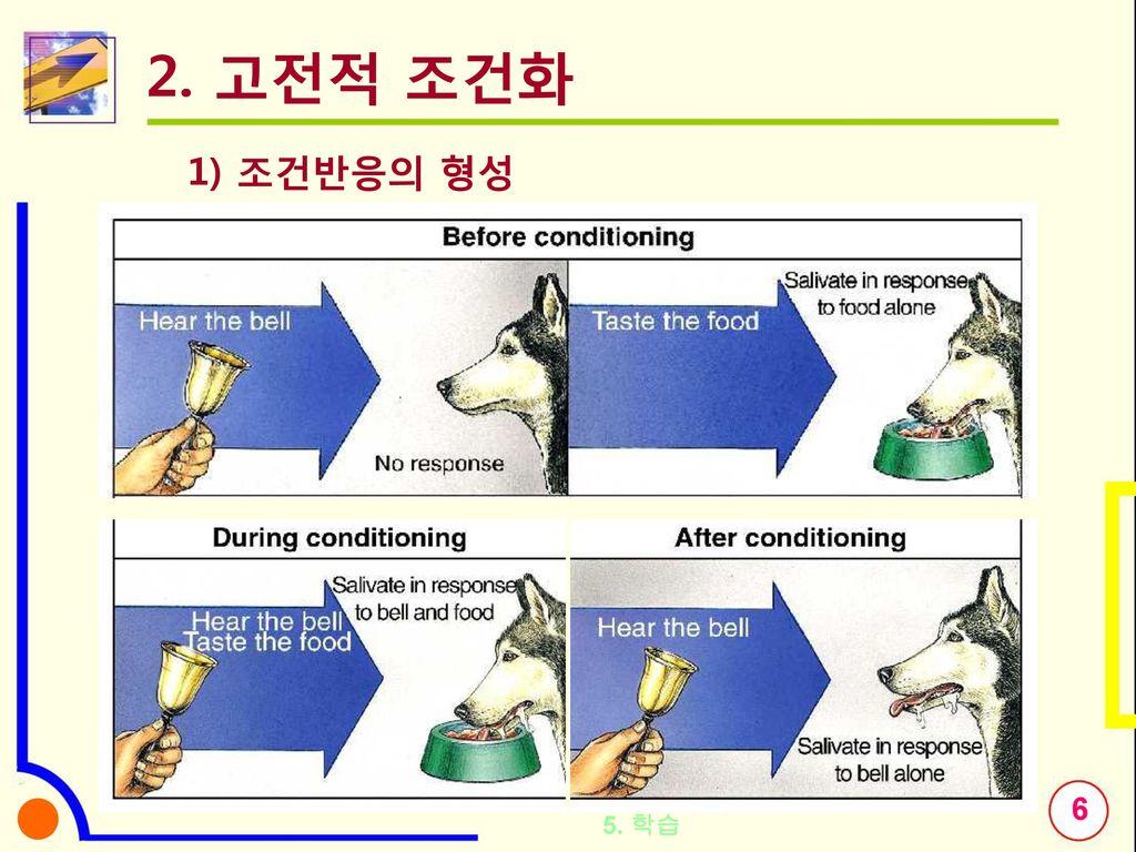 2. 고전적 조건화 1) 조건반응의 형성 조건 반응 형성의 실례(지연조건화) 5. 학습