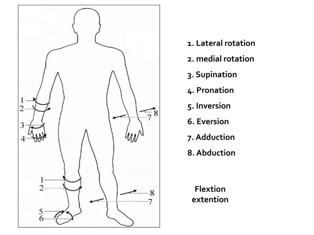 1. Lateral rotation 2. medial rotation 3. Supination 4. Pronation