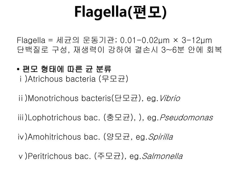 Flagella(편모) Flagella = 세균의 운동기관; 0.01-0.02μm × 3-12μm