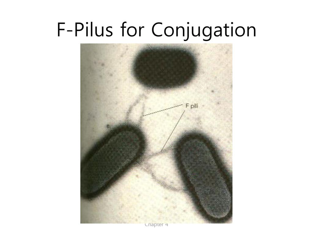 F-Pilus for Conjugation
