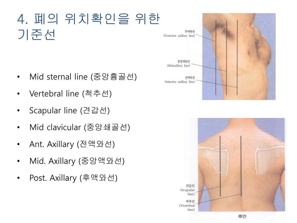 4. 폐의 위치확인을 위한 기준선 Mid sternal line (중앙흉골선) Vertebral line (척추선)