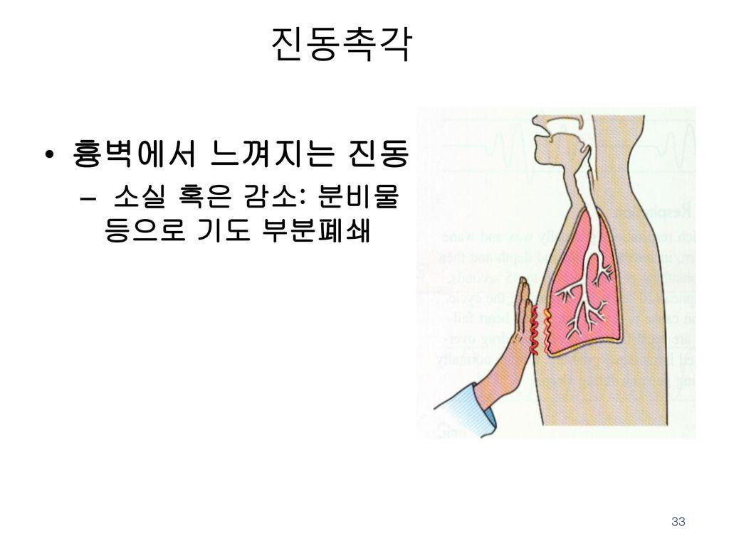 진동촉각 흉벽에서 느껴지는 진동 소실 혹은 감소: 분비물 등으로 기도 부분폐쇄