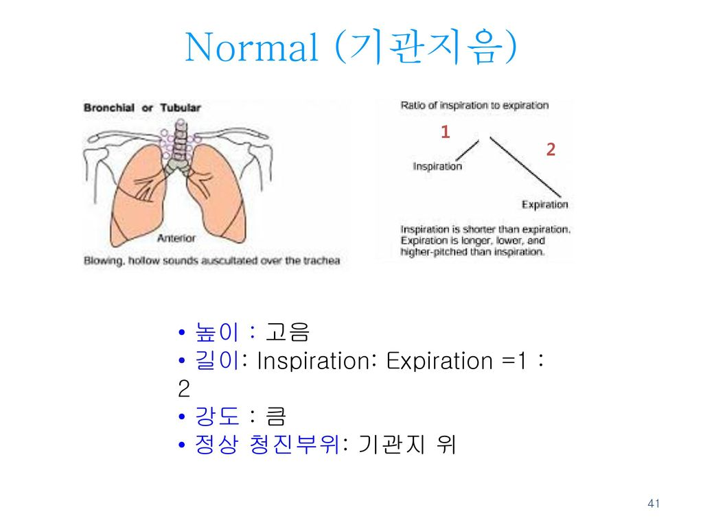 Normal (기관지음) 높이 : 고음 길이: Inspiration: Expiration =1 : 2 강도 : 큼