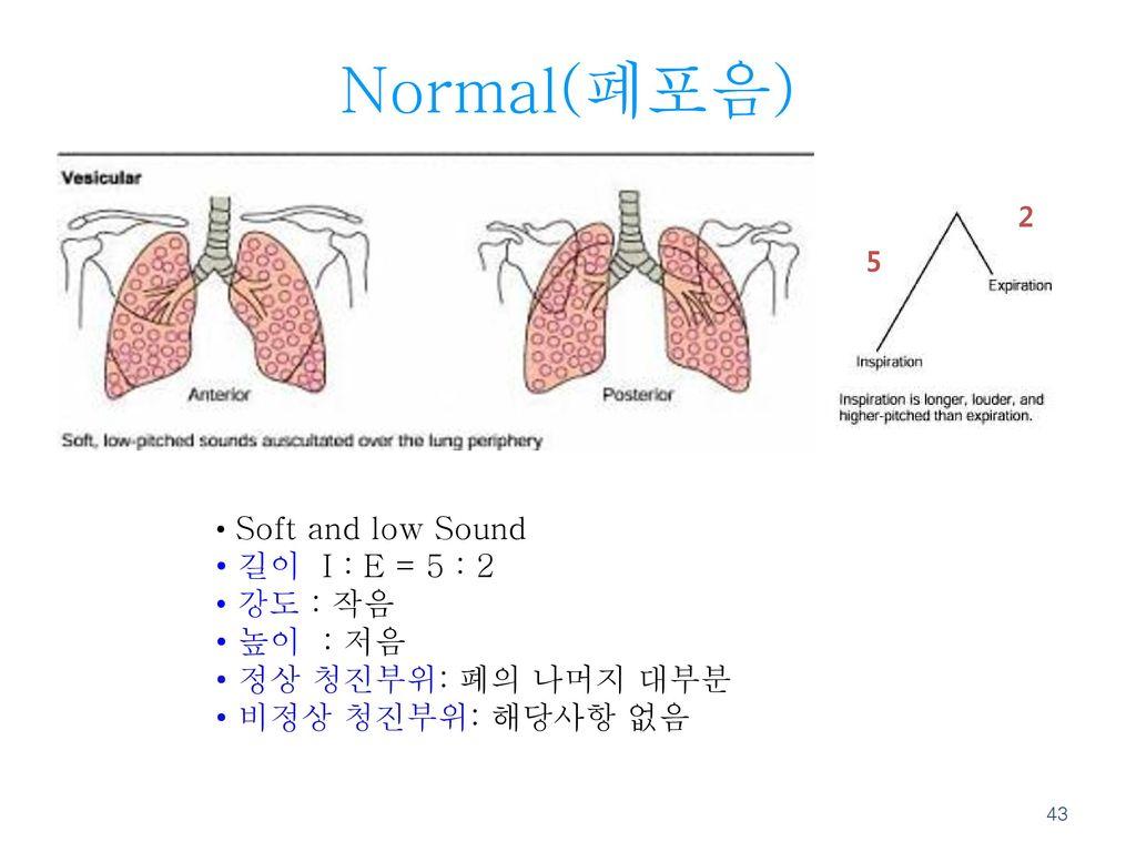 Normal(폐포음) 길이 I : E = 5 : 2 강도 : 작음 높이 : 저음 정상 청진부위: 폐의 나머지 대부분