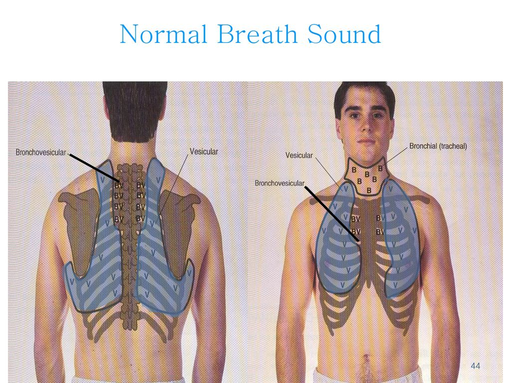 Normal Breath Sound