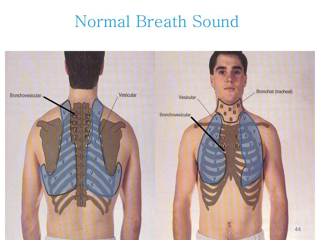Normal Breath Sound