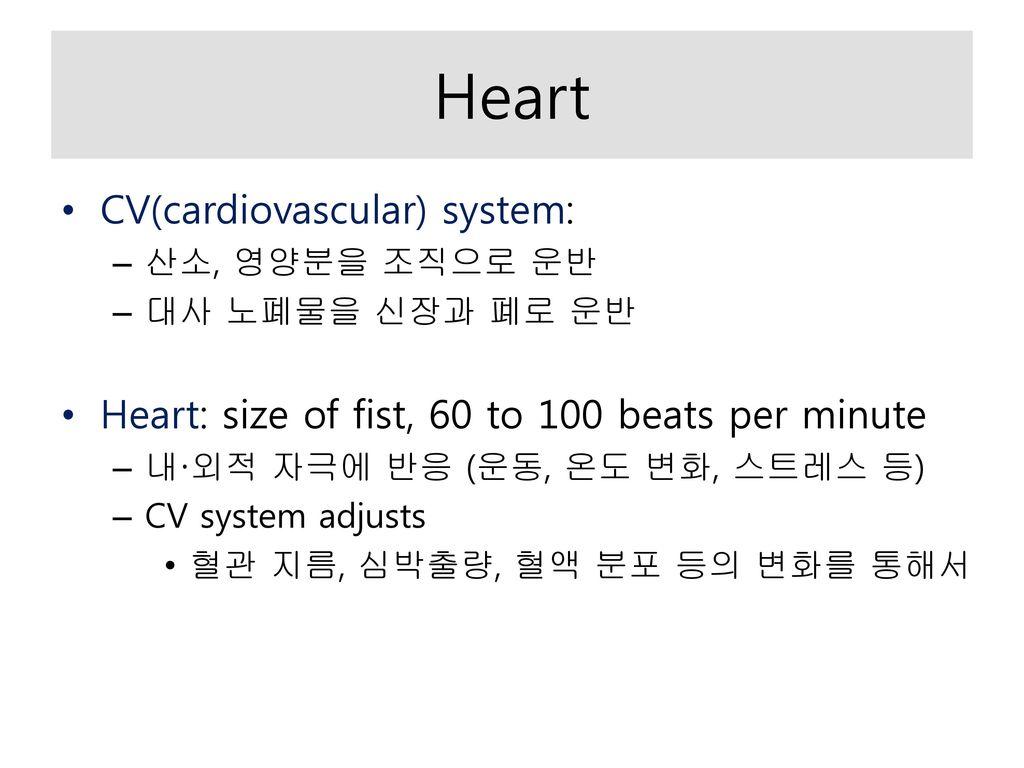 Heart CV(cardiovascular) system: