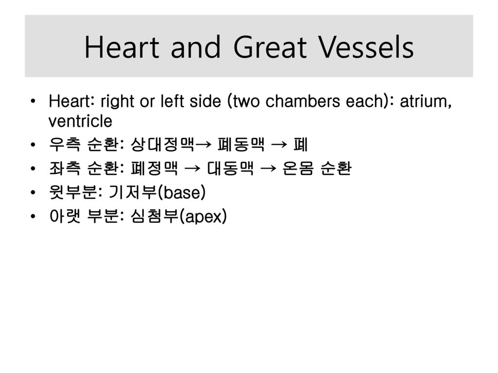 Heart and Great Vessels