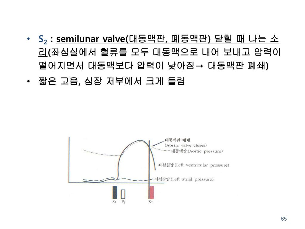 S2 : semilunar valve(대동맥판, 폐동맥판) 닫힐 때 나는 소리(좌심실에서 혈류를 모두 대동맥으로 내어 보내고 압력이 떨어지면서 대동맥보다 압력이 낮아짐→ 대동맥판 폐쇄)