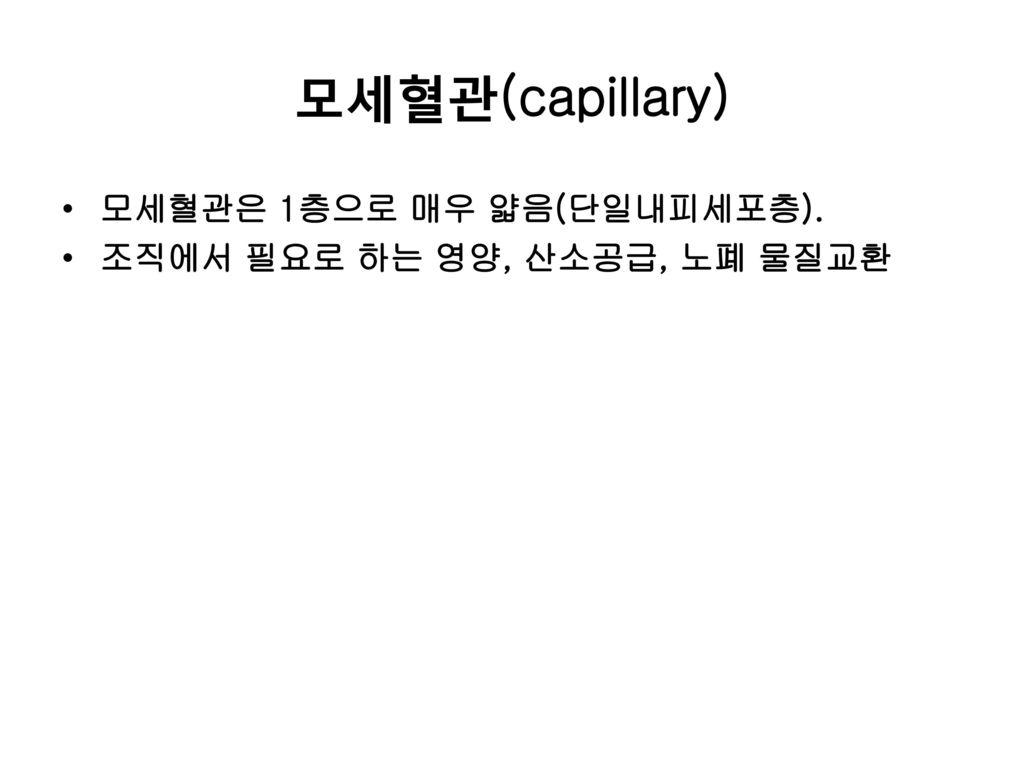 모세혈관(capillary) 모세혈관은 1층으로 매우 얇음(단일내피세포층).