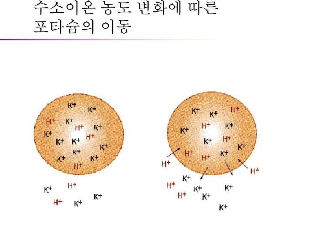 수소이온 농도 변화에 따른 포타슘의 이동
