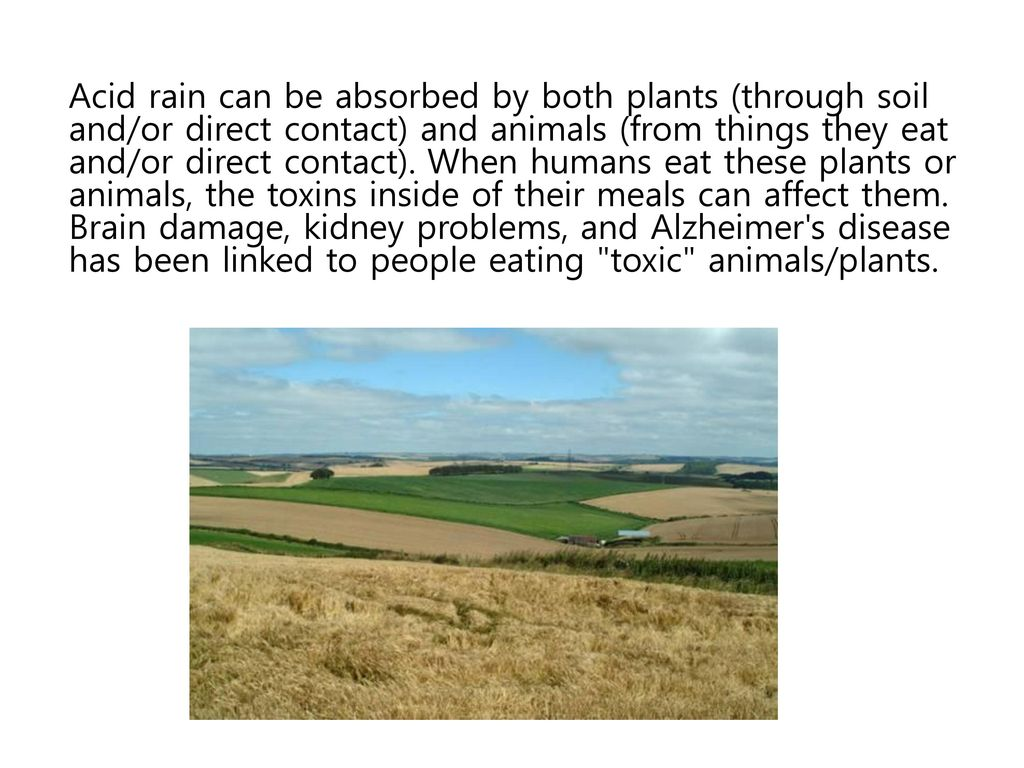 Acid rain can be absorbed by both plants (through soil and/or direct contact) and animals (from things they eat and/or direct contact).