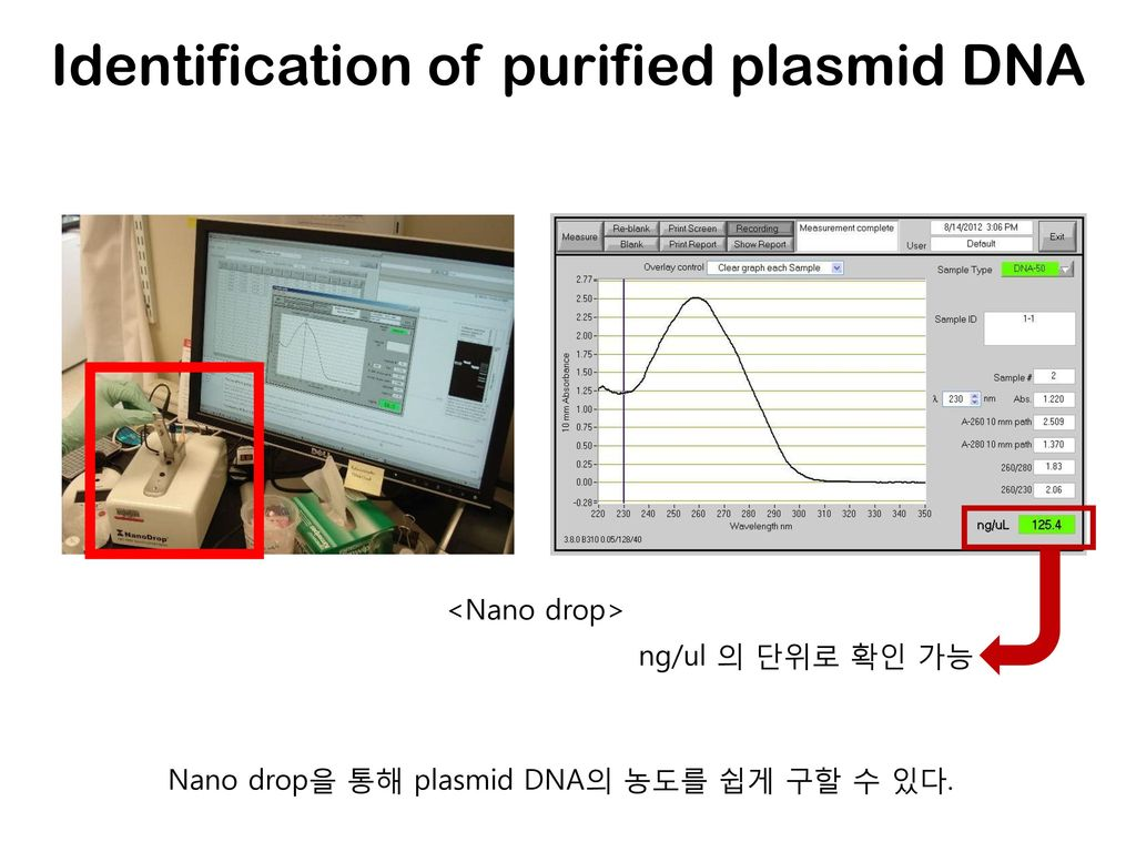 Identification of purified plasmid DNA