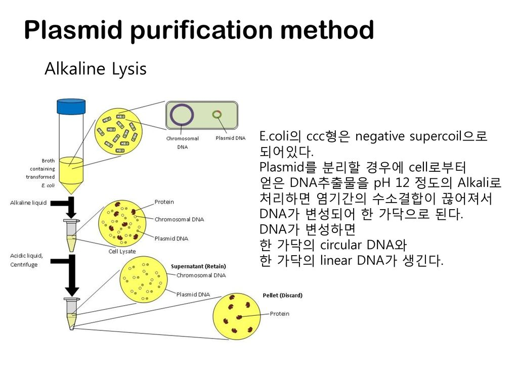 Plasmid purification method