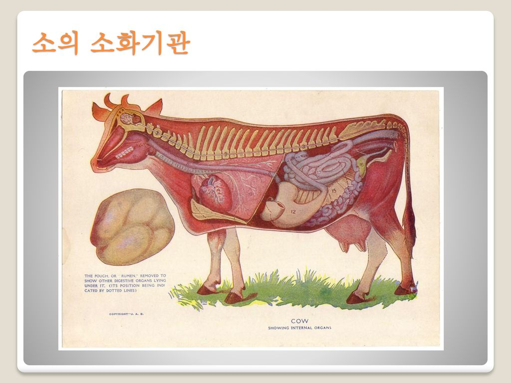 소의 소화기관