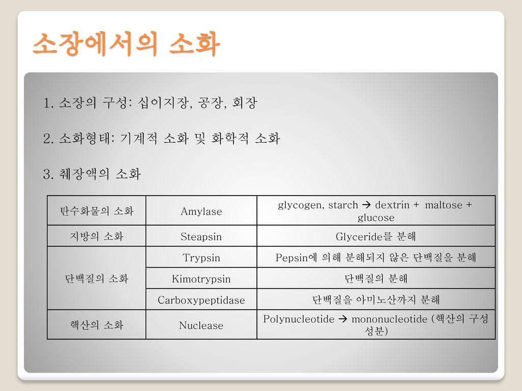 소장에서의 소화 1. 소장의 구성: 십이지장, 공장, 회장 2. 소화형태: 기계적 소화 및 화학적 소화 3. 췌장액의 소화