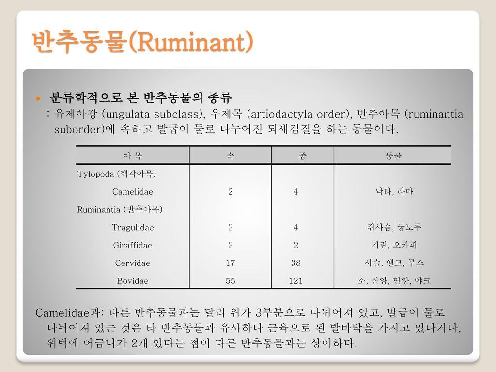 반추동물(Ruminant) 분류학적으로 본 반추동물의 종류