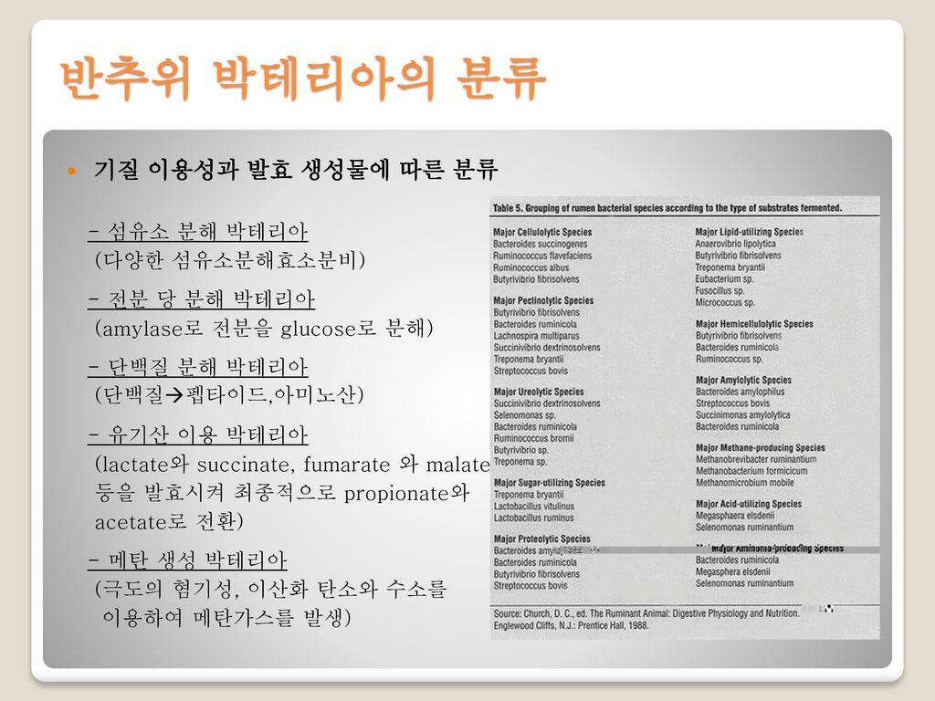 반추위 박테리아의 분류 기질 이용성과 발효 생성물에 따른 분류 - 섬유소 분해 박테리아 (다양한 섬유소분해효소분비)