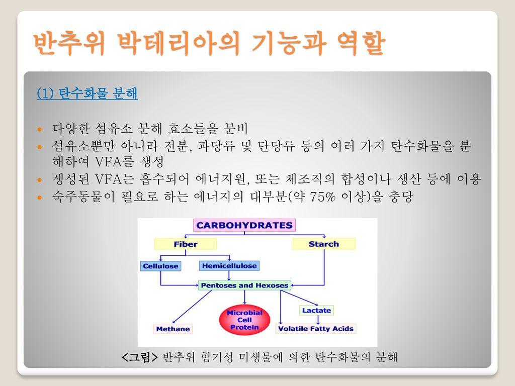 반추위 박테리아의 기능과 역할 (1) 탄수화물 분해 다양한 섬유소 분해 효소들을 분비