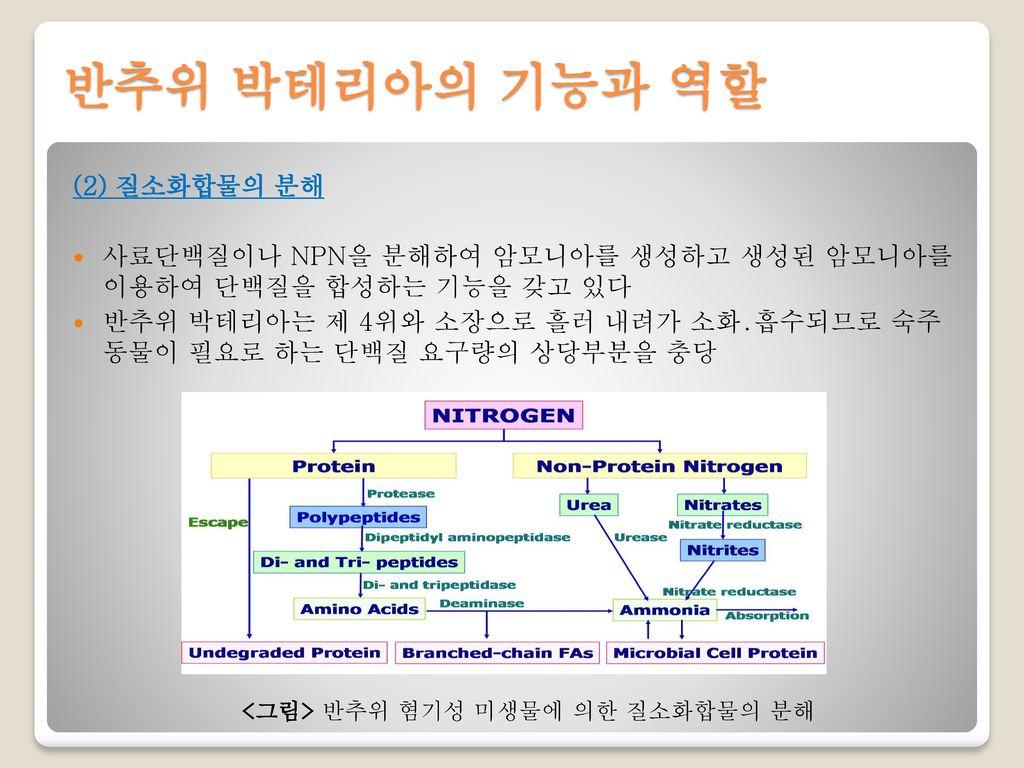 반추위 박테리아의 기능과 역할 (2) 질소화합물의 분해