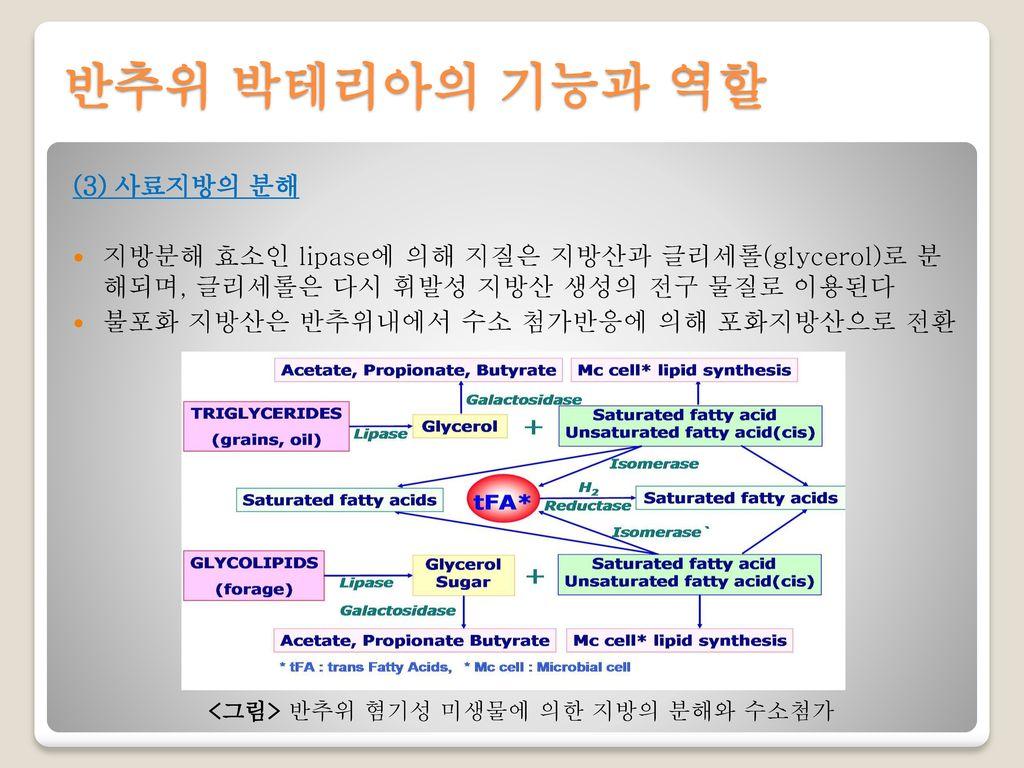반추위 박테리아의 기능과 역할 (3) 사료지방의 분해