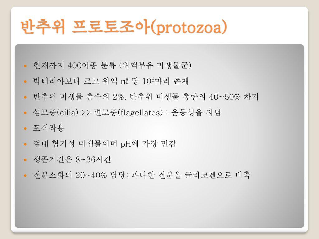 반추위 프로토조아(protozoa) 현재까지 400여종 분류 (위액부유 미생물군)