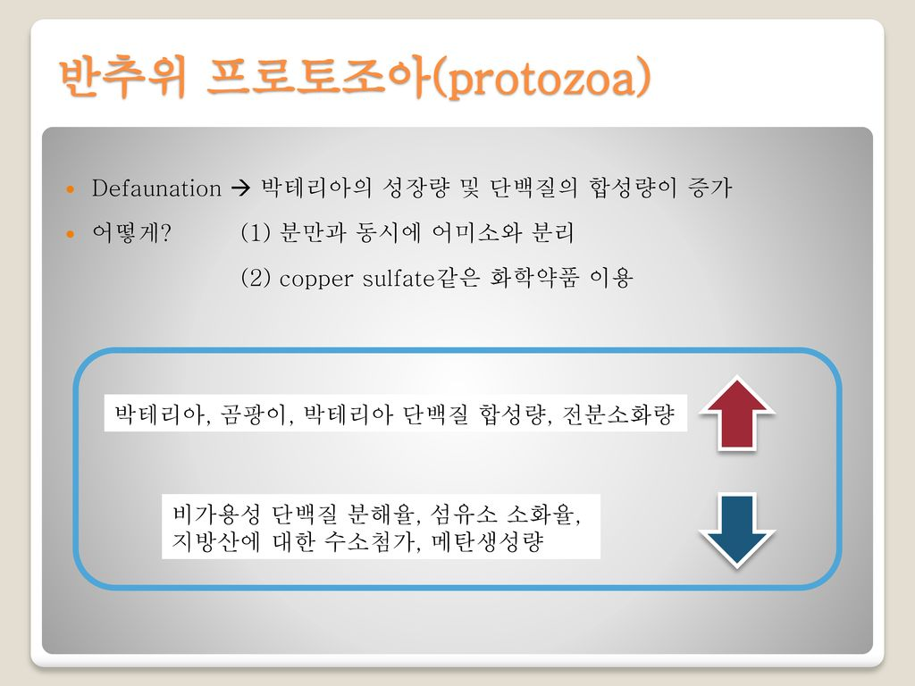 반추위 프로토조아(protozoa) Defaunation  박테리아의 성장량 및 단백질의 합성량이 증가