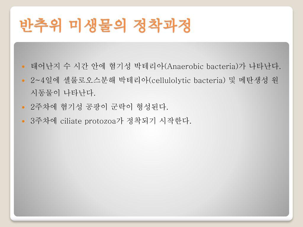 반추위 미생물의 정착과정 태어난지 수 시간 안에 혐기성 박테리아(Anaerobic bacteria)가 나타난다.