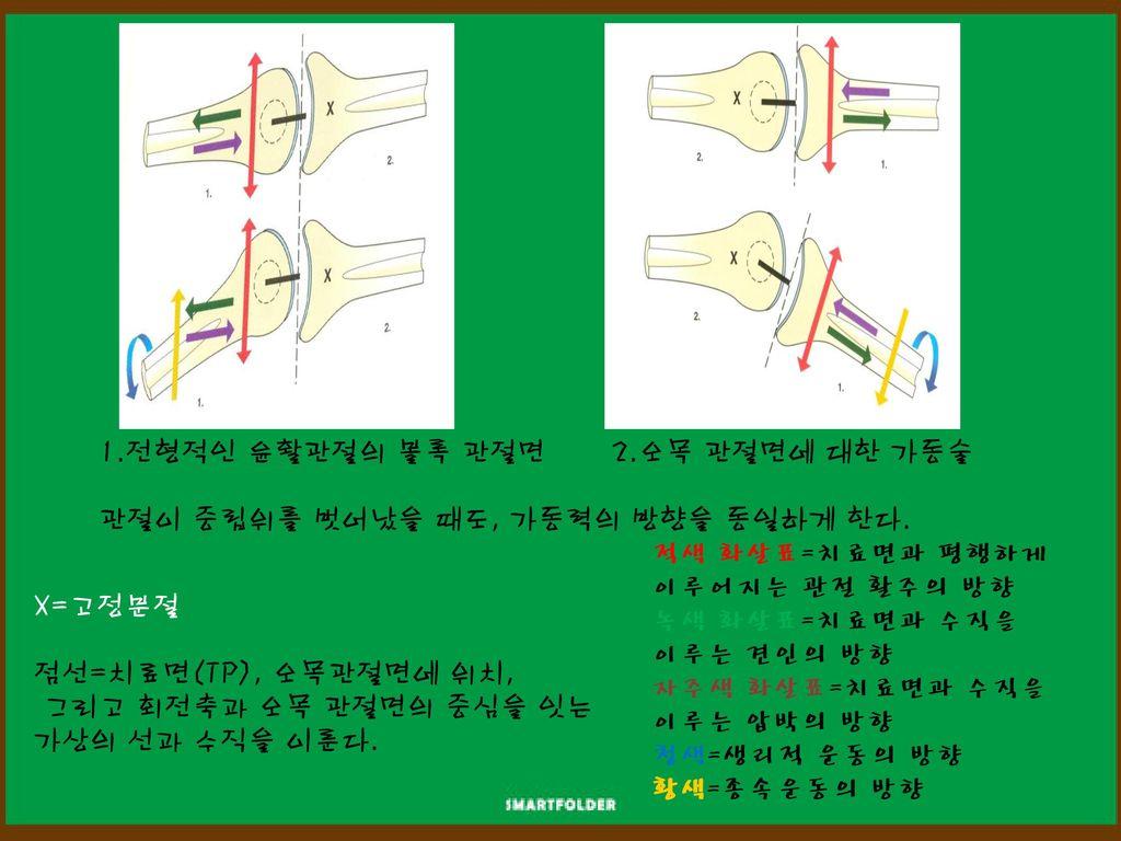1.전형적인 윤활관절의 볼록 관절면 2.오목 관절면에 대한 가동술