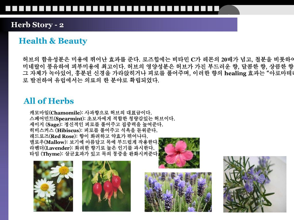 Health & Beauty All of Herbs Herb Story - 2