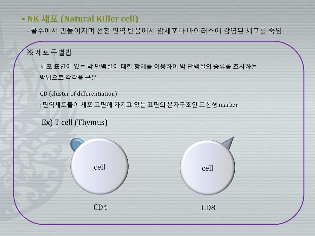 • NK 세포 (Natural Killer cell)