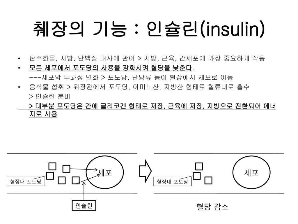 췌장의 기능 : 인슐린(insulin) 세포 혈당 감소