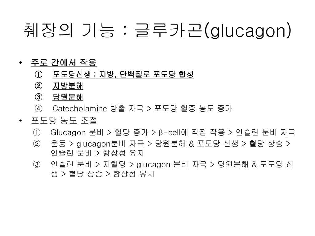 췌장의 기능 : 글루카곤(glucagon)