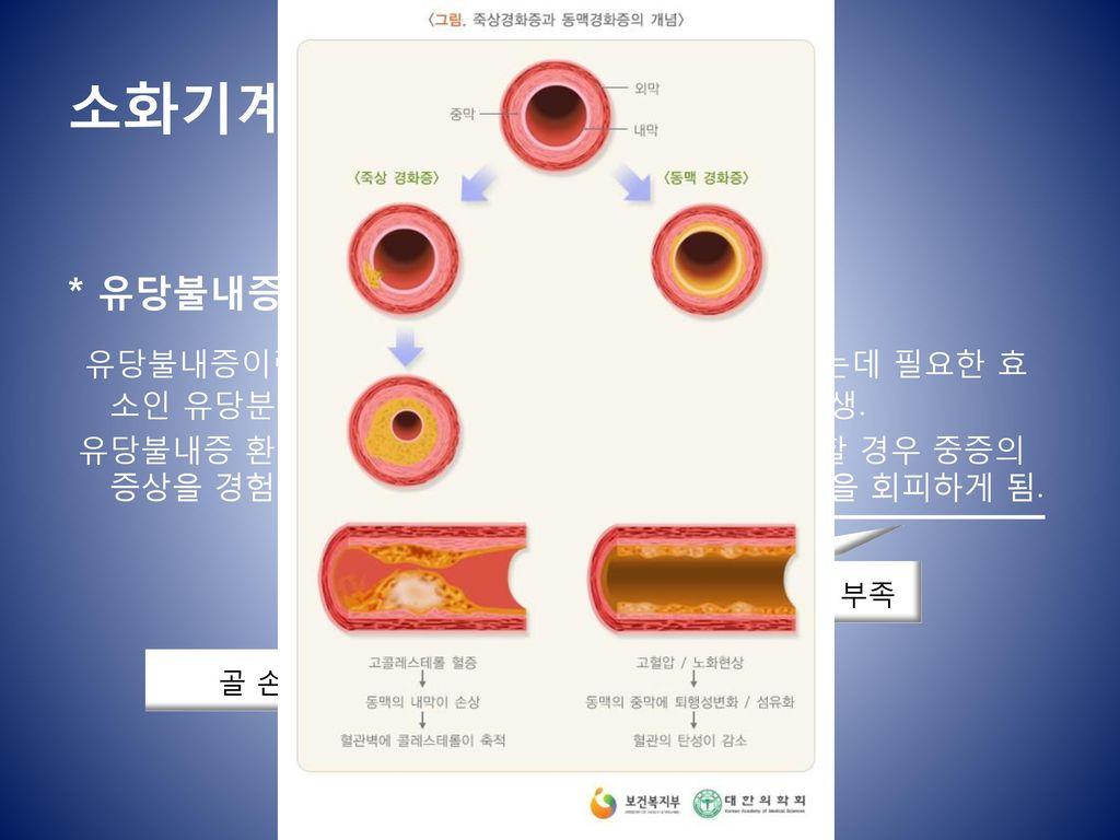 소화기계통(Digestive System)