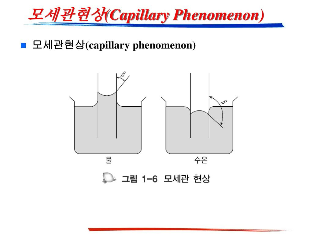 모세관현상(Capillary Phenomenon)