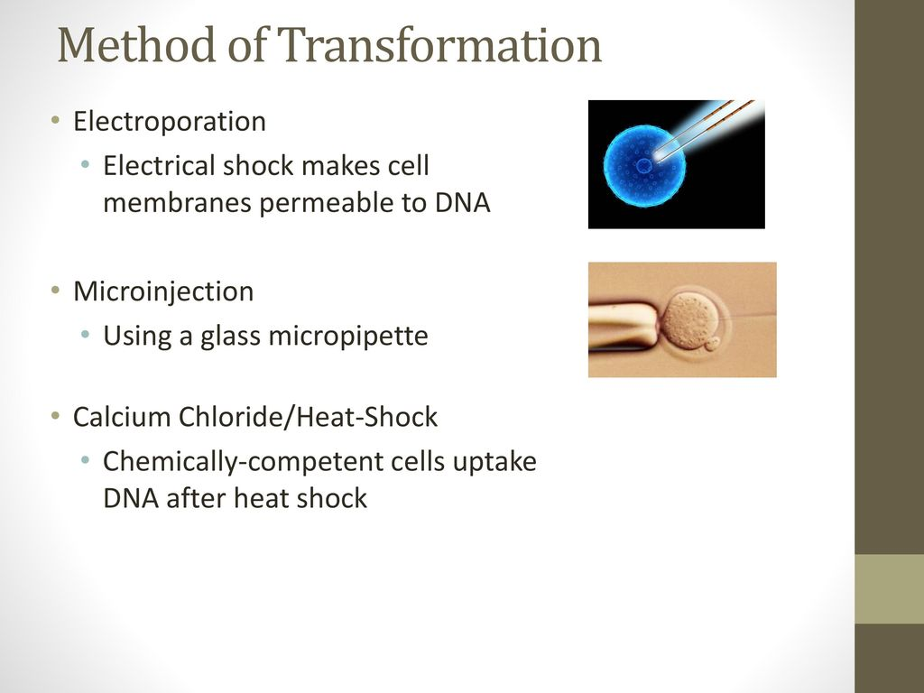 Method of Transformation