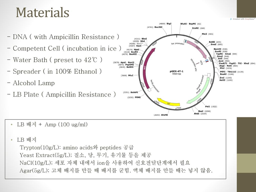 Materials - DNA ( with Ampicillin Resistance )