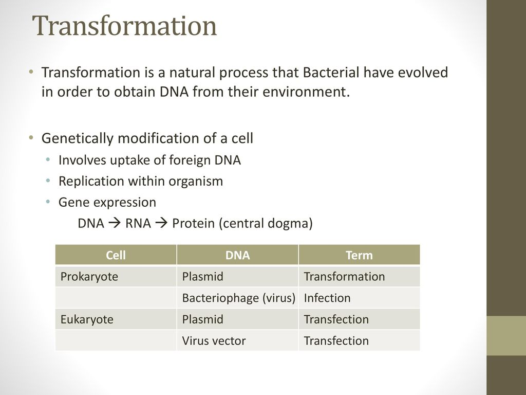 Transformation Transformation is a natural process that Bacterial have evolved in order to obtain DNA from their environment.